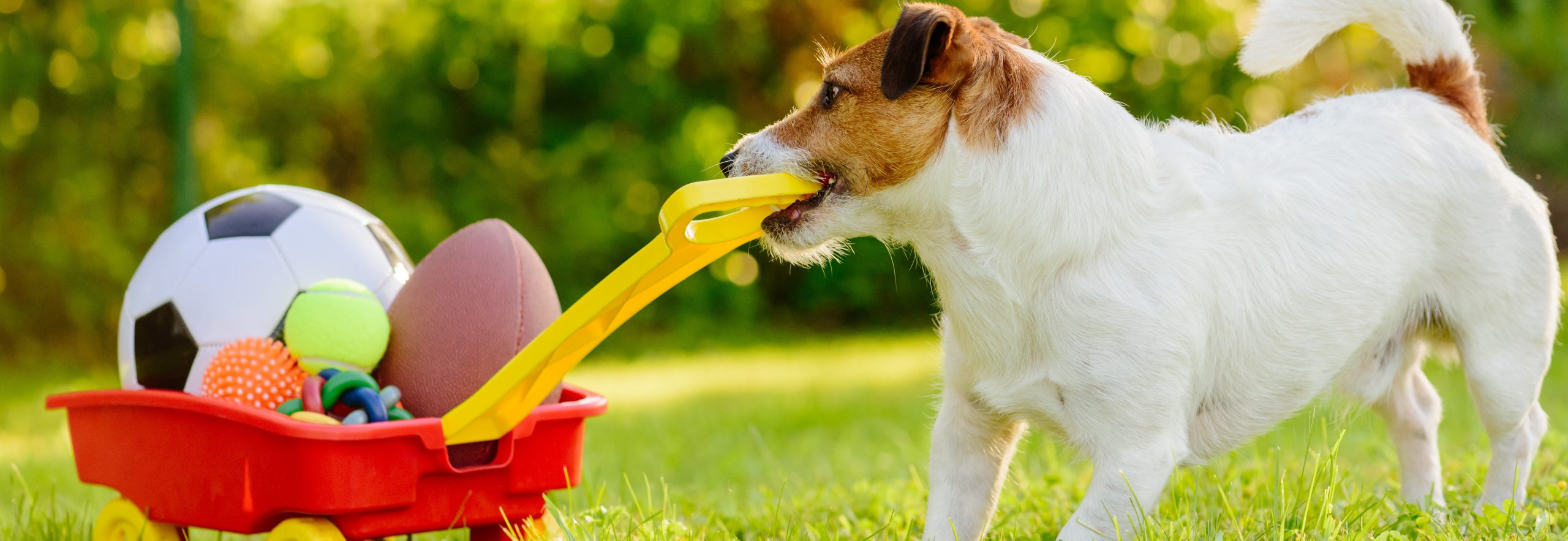 Concept of fun summer activities with dog and many sport balls